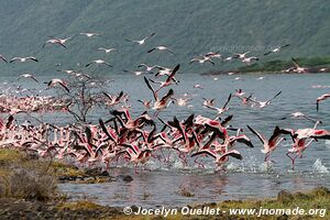 Lake Bogoria National Reserve - Kenya