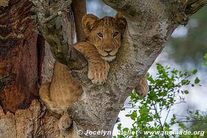 Parc national Queen Elizabeth - Ouganda