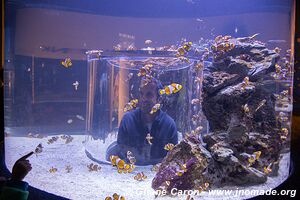 Two Oceans Aquarium - City Bowl - Cape Town - South Africa