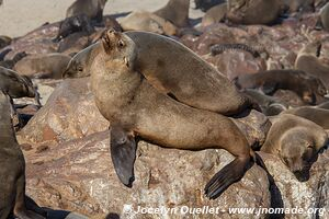 Cape Cross Seal Reserve -  - Namibia