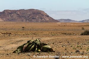 Dorob National Park -  - Namibia