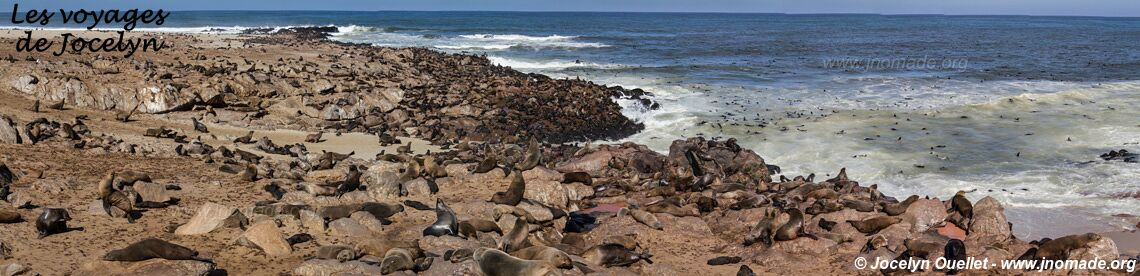 Cape Cross Seal Reserve - Skeleton Coast - Namibie