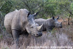 Mkhuze Game Reserve - The Elephant Coast - South Africa