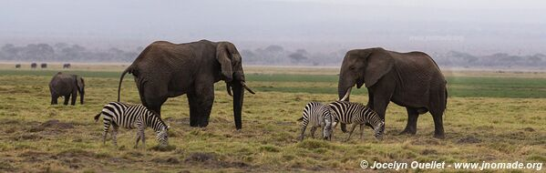 Amboseli National Park - Kenya