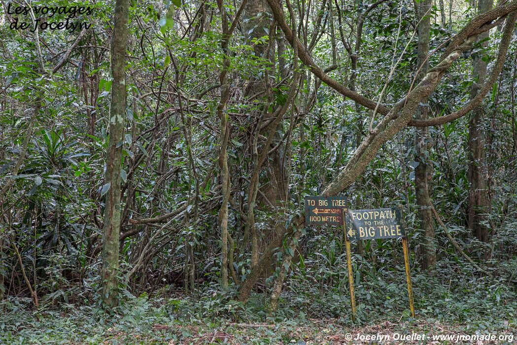 Town And Country Toyota >> Chirinda Forest - Cape Town to Tanzania 2014 - Les voyages de Jocelyn